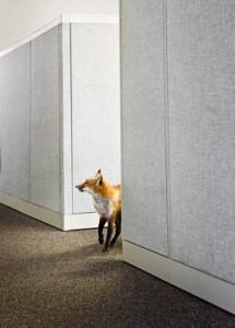 Fox in office